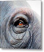 Elephant Eye Metal Print
