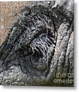 Elephant Eyelash Metal Print