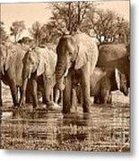 Elephant Family At Khwai Metal Print