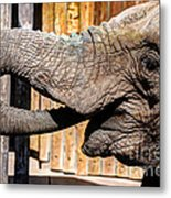 Elephant Feeding Time At The Zoo Metal Print