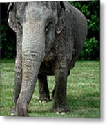 Elephant Greet Metal Print