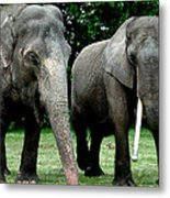Elephant Meeting Metal Print