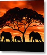 Elephant Sun Set Metal Print