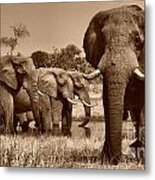 Elephants At Khwai River Metal Print