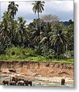 Elephants In The River Metal Print