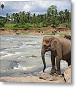 Elephants Metal Print by Jane Rix