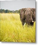 Elephants Of Botswana Metal Print