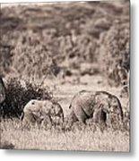 Elephants Walking In A Row Samburu Kenya Metal Print