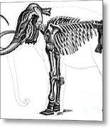 Elephas, Extant Cenozoic Mammal Metal Print