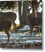Eleven Deer Standing Metal Print