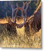 Elk 2 Elk Metal Print
