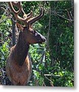 Elk Metal Print