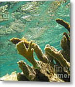 Elkhorn Coral In Sunshine Metal Print
