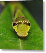 Emerald Swallowtail Caterpillar Metal Print