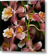 Emma's Orchid Metal Print