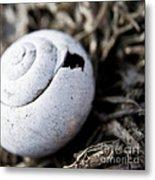 Empty Snail Shell Metal Print