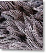 Emu Feathers Metal Print