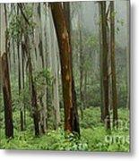 Australia Enchanted Forest Metal Print