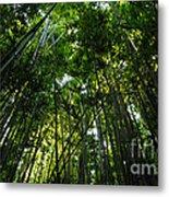 Enchanted Forest Haleakala National Park Metal Print