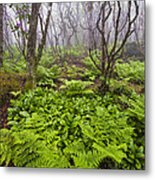 Enchanted Woodland Forest In Fog Blue Ridge Parkway In North Carolina Metal Print