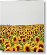 Endless Field Of Dreams Metal Print