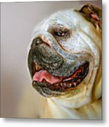 English Bulldog Willie In Profile Metal Print by Dorothy Walker