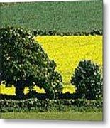 English Field Of Yellow 2 Metal Print