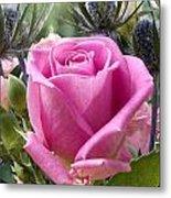 English Pink Rose Close Up Metal Print