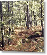 English Woods And Autumn Ferns Metal Print