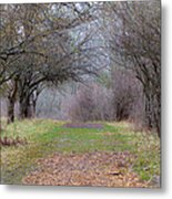 Enter The Mystery Forest Metal Print