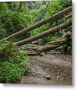 Entrance To Fern Canyon Metal Print