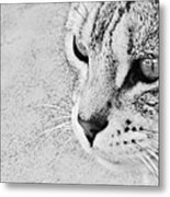 Eternal Stare Down Metal Print