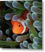 Eternal Theme Metal Print by Nature, underwater and art photos. www.Narchuk.com