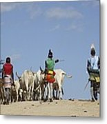 Ethiopia, Hamer Tribe Herding Cattl Metal Print by Photostock-israel