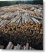 Eucalyptus Stacked Lumber Metal Print