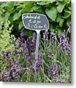 European Markets - Lavender Metal Print