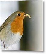 European Robin Feeding On A Mealworm Metal Print by Duncan Shaw