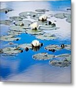 European White Waterlily Metal Print