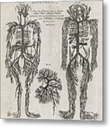 Evelyn Table Blood Vessels, 17th Century Metal Print