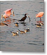 Evening Activity In The Bay Metal Print