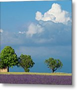 Evening In Provence Metal Print