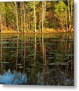 Evening Light On A Missouri Pond I Metal Print