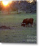 Evening Meal Metal Print