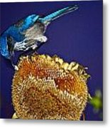 Evening Snack Metal Print