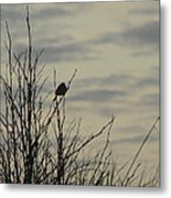 Evening Song Metal Print by Pamela Patch