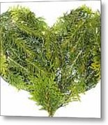Evergreen  Coniferous Christmas Trees Heart Isolated Metal Print