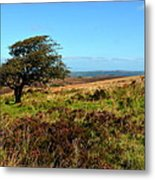 Exmoor's Heather-covered Hills Metal Print