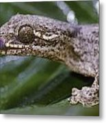 Extreme Close-up Of A Gecko In The Rain Metal Print