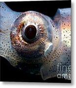 Eye Flash Squid Metal Print