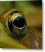 Eye Of Frog Metal Print